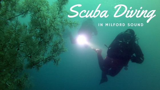 Scuba Diving in Milford Sound